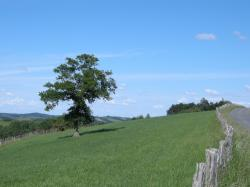 paysage(2)